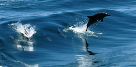 Swim with Dolphins Perth Tours - Everything Australia