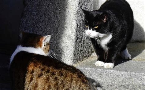 Shocking photograph shows Palmerston with missing fur - is