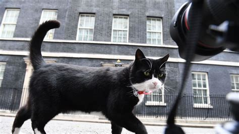 Foreign Office's Palmerston is mouser in chief as Larry