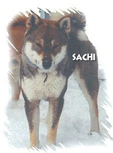 Shikoku dogs and breeders in Canada - CanaDogs