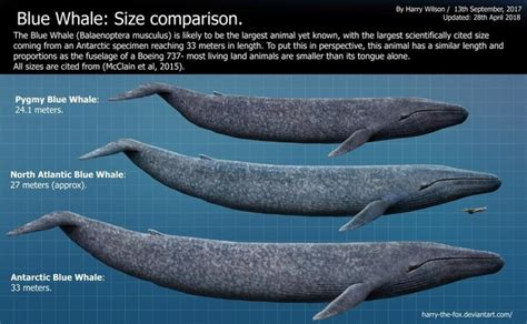 Is there a greater prehistoric marine predator than the