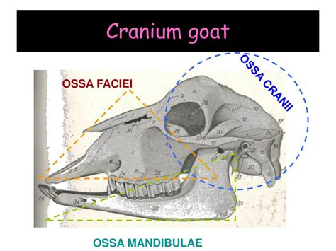 PPT - OSTEOLOGY PowerPoint Presentation, free download