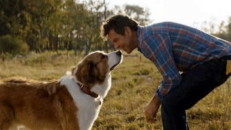 'A Dog's Journey' Review: Good Boys (and Girls) on a