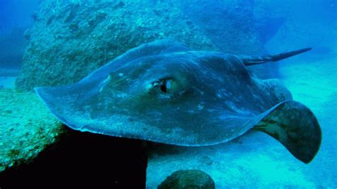 Stingray Attacks Are On the Rise in Southern California