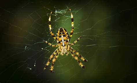 Spiders' Electrostatic Charge Helps Them Trap Prey In