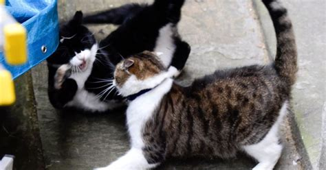 This means war! Tory government catfight gets violent as