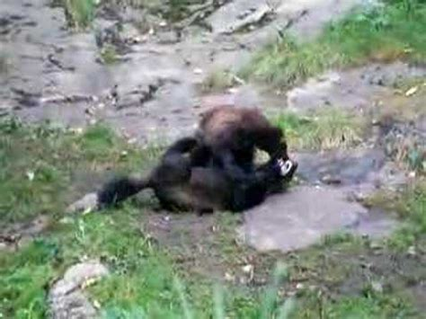 Young Wolverines - YouTube