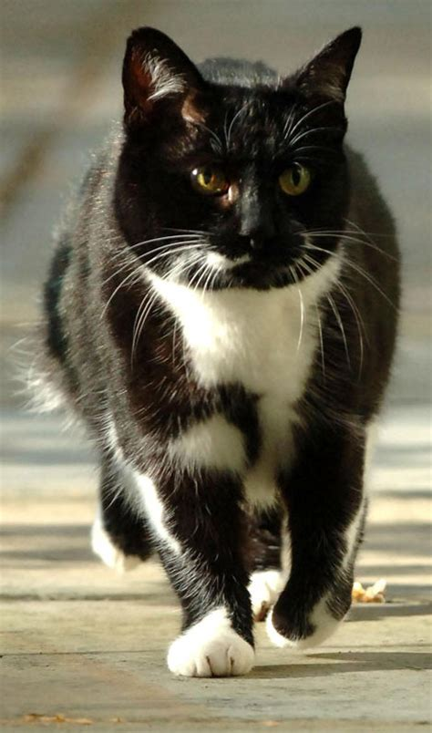Ten years after the Humphrey hoo-ha, a cat returns to